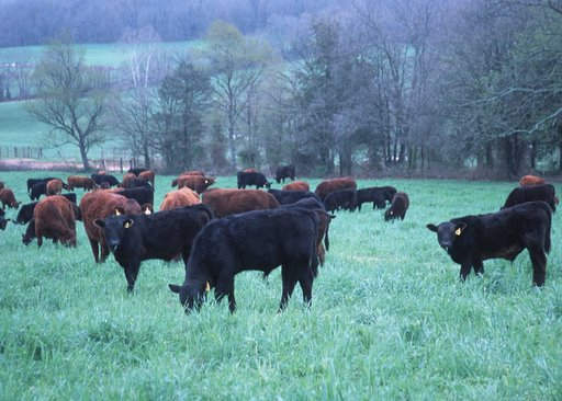 The Foundation helps farmer keep cow manure from polluting local streams
